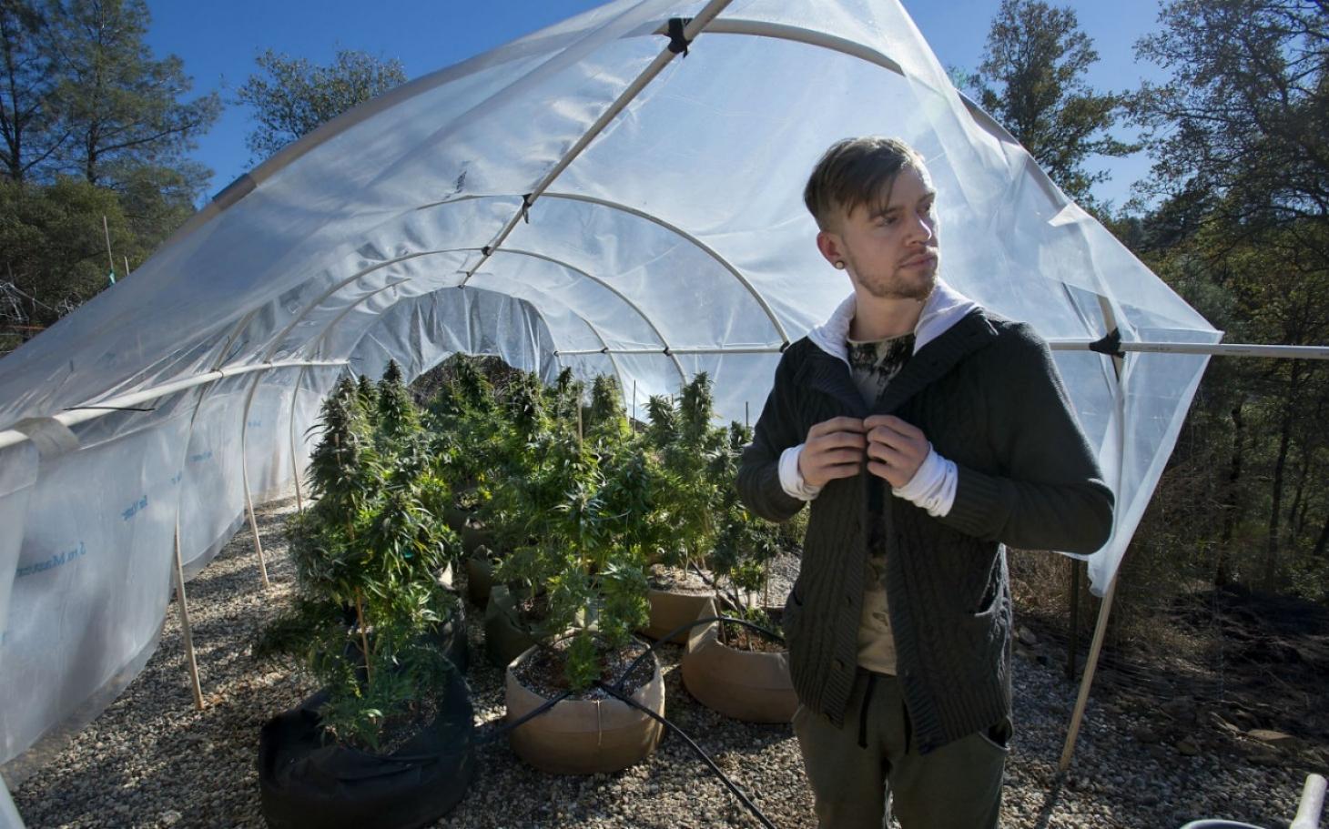California, Nevada approve recreational marijuana; Arkansas voters support medicinal use