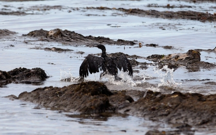 Santa Barbara spill caused by external corrosion of oil pipe