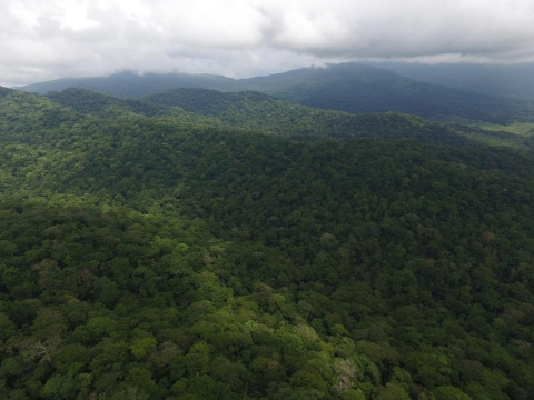 Rainforest outside Platanares/Rio Hondo, district of Chiman, Panama, shot with a helicopter drone.