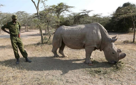 Thumbnail image for Kenya races to save last white rhinos