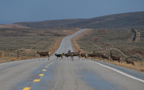 Revealed Biologists Discover Longest Mammal Migration In