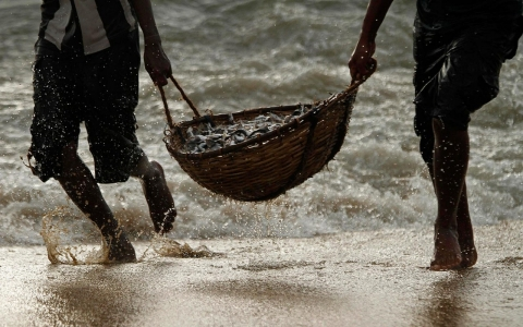 Sri Lankan fishermen carry their catch at the end of the day in Negambo, Sri Lanka, Tuesday, June 21, 2011.