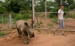 Rhino orphanage in South Africa takes in littlest victims of poaching