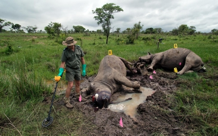 The human victims in the fight over rhino poaching in Africa