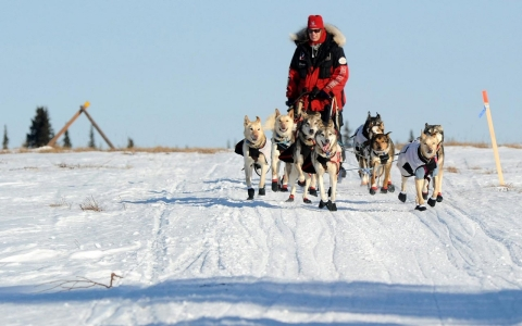 Thumbnail image for Born to run: Iditarod veteran in it for the journey