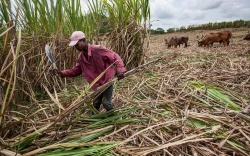 Blood, sweat and sugar: Trade deal fails Haitian workers on DR plantations
