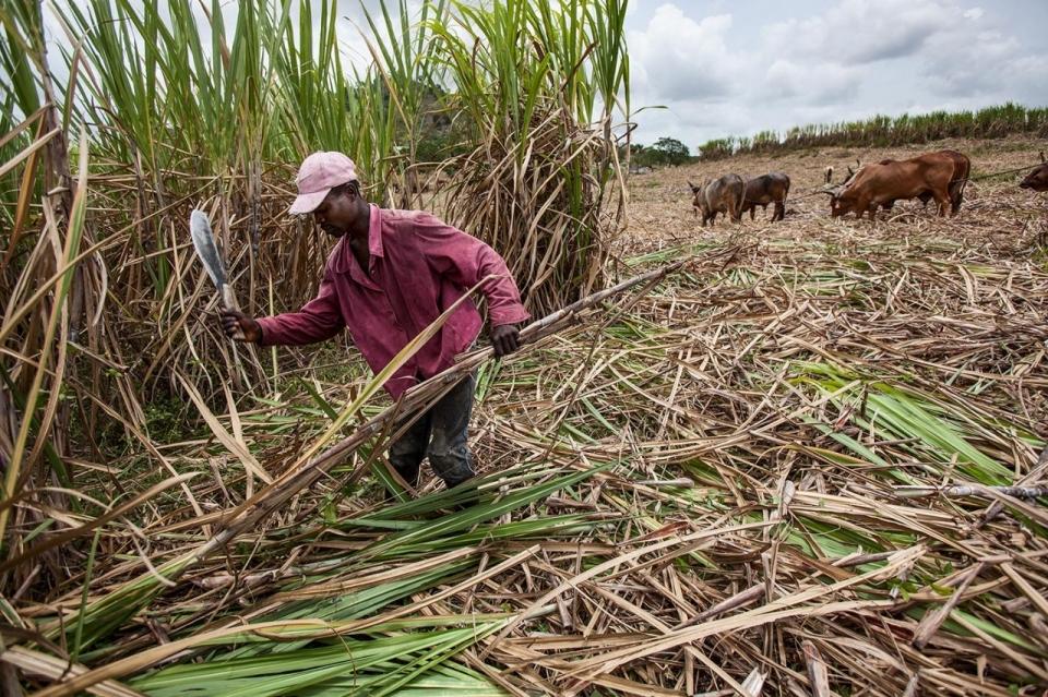 Trade Deal Fails Haitian Workers In Dr Sugar Al Jazeera America
