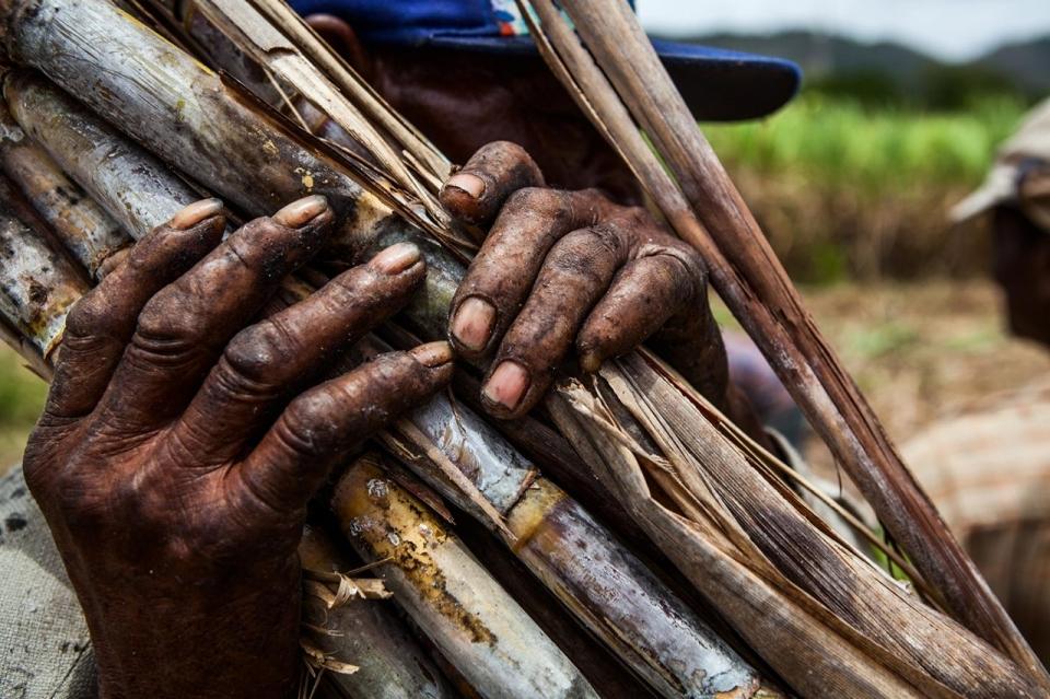 Dominican Republic sugar cane