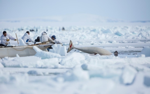 Thumbnail image for In hunt for bowhead whale, Alaska Native village preserves its past