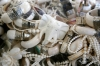 Confiscated ivory jewelry is displayed before the U.S. Fish and Wildlife Service crushed six tons of ivory in Colorado Thursday.