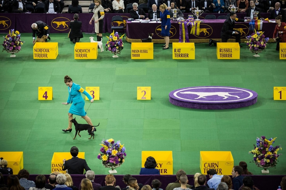 Th Westminster Dog Kennel Club Show