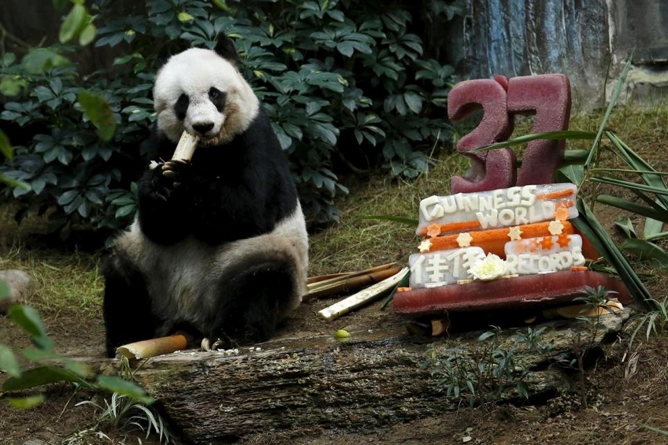 Giant Panda Channel Giant Panda Jia Jia Eats