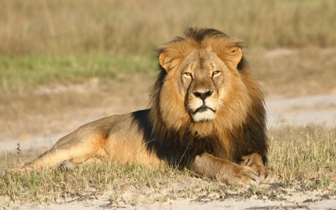 Thumbnail image for 'Cecil who?' Zimbabweans ask