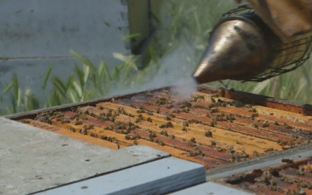 Did USDA suppress bee death research to protect pesticide industry?
