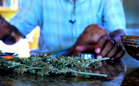 Jamaican farmers, entrepreneurs excited over budding ganja green rush