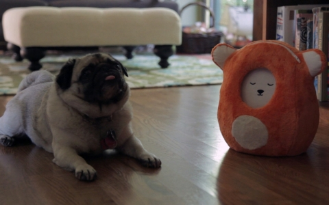 A pug poses with a Ubooly toy.
