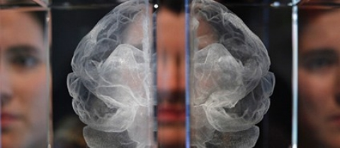 Thumbnail image for Could soldiers, like football players, be at risk of brain disease?