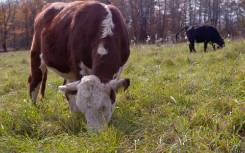 With Americans consuming about 25 billion pounds of beef each year, it has come at a steep price for the environment.