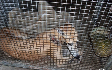 Report: More than 900 greyhounds have died on racing tracks since 2008