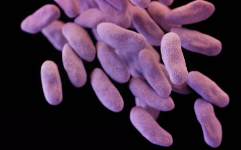 Thumbnail image for Medical scope now tied to Wisconsin superbug outbreak