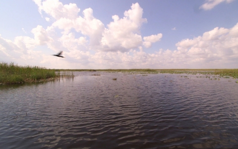 Thumbnail image for Obama visits Florida Everglades on Earth Day