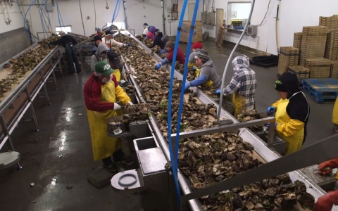Fishing families such as the Taylors are having their way of life threatened. Now, they are now working to regenerate local shellfish populations in the Northwest, aided by science being conducted by the state of Washington.