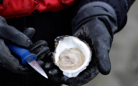 Thumbnail image for Farmers call oysters the 'canary in the coal mine'