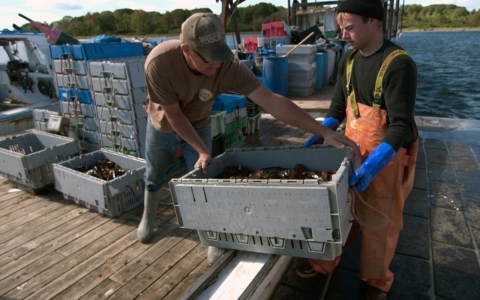 Thumbnail image for Maine lobstermen in a pinch over low prices, record catch