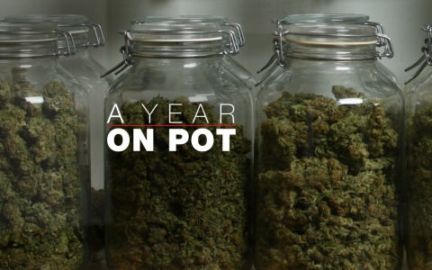 A Year on Pot