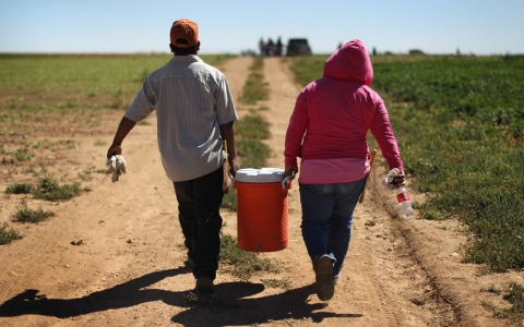 Migrant farm workers from Mexico carry a cooler in a family farm in Wellington, Colo. on Sep. 3, 2010.