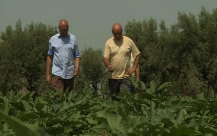 Land once controlled by Mafia now shared by several Italian farmers