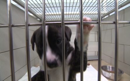 Tennessee to establish animal abuse registry