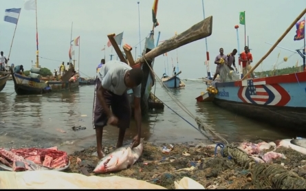 Foreign demand for shark fins driving the industry in Ghana