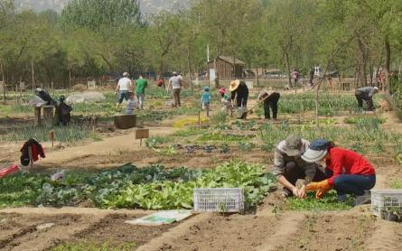 Middle Class Organic Food China