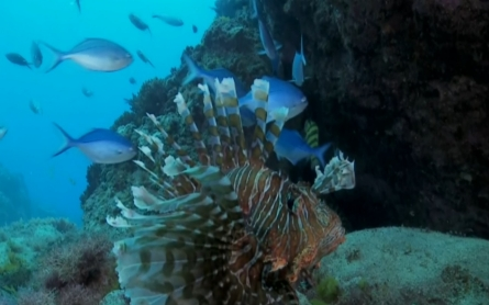 New Zealand's Kermadec region designated marine reserve