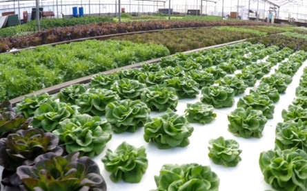 Ancient practice of aquaponic farming could solve drought challenge