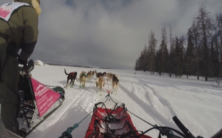 Dog sledding enthusiasts race across the West