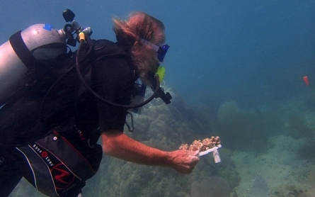 Saving the ocean's coral reefs