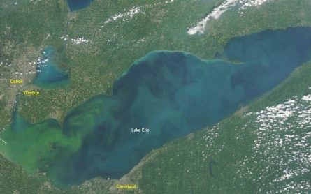 Potentially toxic algae growing in Lake Erie
