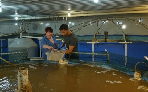Farming Shrimp And Changing The Industry Far From An