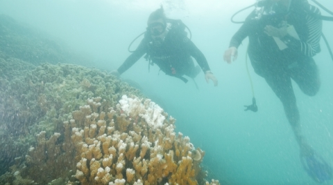Marita and Dr. Gates diving above the coral reef, note the white coral amidst the brown. That's evidence of coral bleaching.