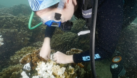 Tagging coral