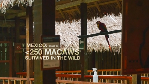 techknow macaw numbers