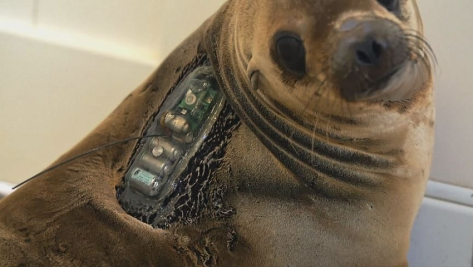Searching for answers sea lion deaths al jazeera america sea lions publicscrutiny Images