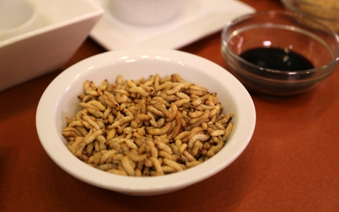 A bowl of waxworms at Bug Appetit.
