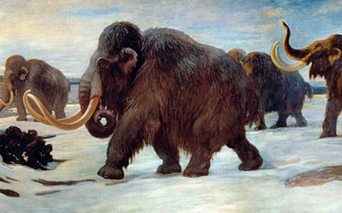 Pleistocene Park in Russia is attempting to restore the mammoth steppe ecosystem and potentially, the woolly mammoth itself.