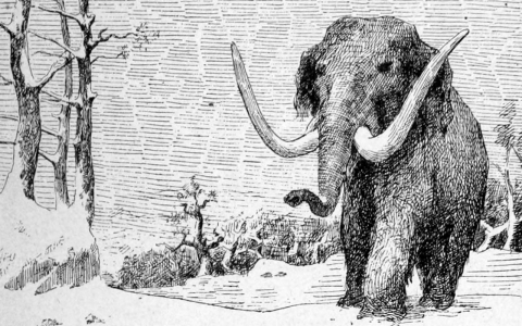 Thumbnail image for Could the woolly mammoth soon walk again?