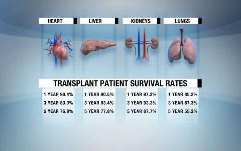 Organ transplant survival rates