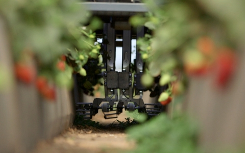 The Agrobot uses cameras to pinpoint and pick the ripest strawberries, eliminating the need for manual labor.