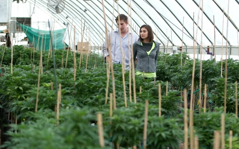 Jesse Stanley shows TechKnow contributor Crystal Dilworth one of the family's greenhouses.